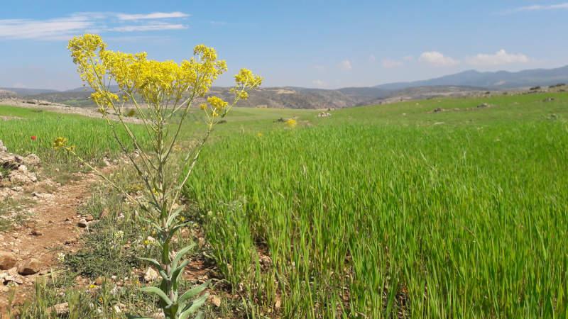 Exploitation agricole dans la région de Fès